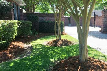 Professionally cared for landscaping in front of a home in Raceland, LA.