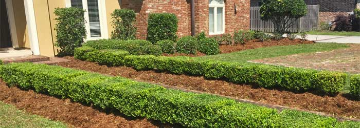 About Lafourche Lawn & Farm landscape maintenance and lawn care.