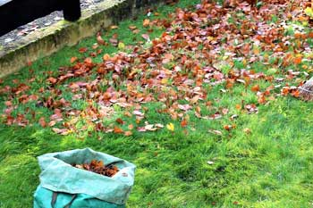 Leaf raking during a fall yard cleanup services at a home in Houma.